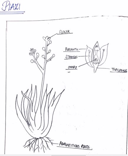 Biology Practical Class XI Archives - Notes For Free